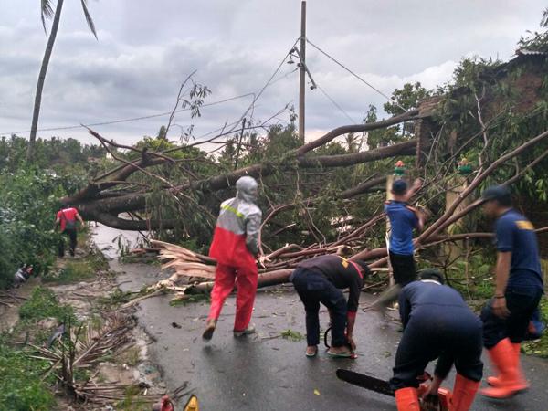 Tim BPBD Kota Bandar Lampung memotong pohon petai cina yang roboh. (Foto: Lampungnews.com/El Shinta)