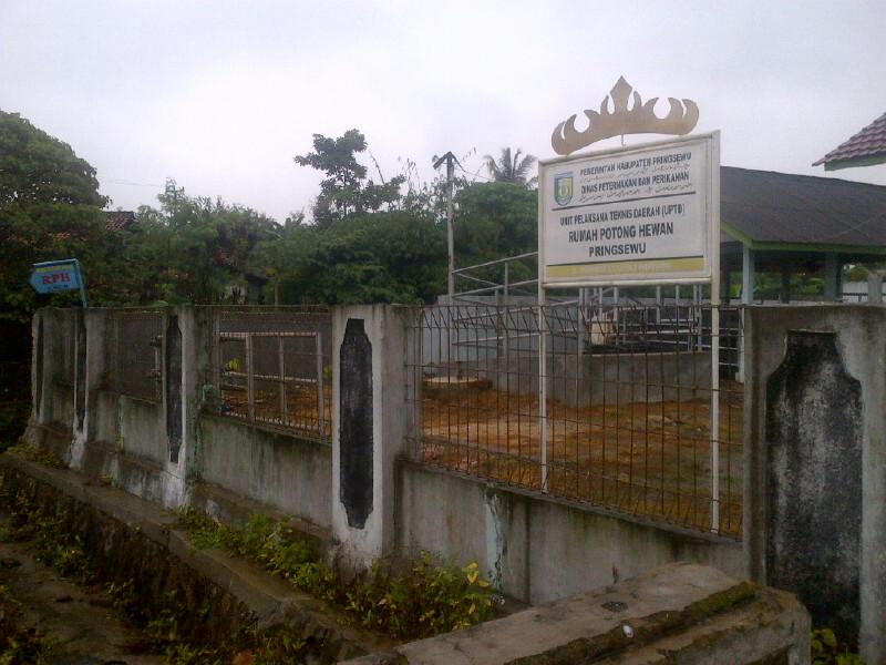 Rumah potong hewan di Pekon Podomoro, Pringsewu (Lampungnews/Anton Nugroz)