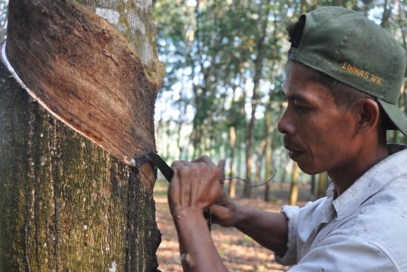 Petani menyadap pohon karet di kebunnya. Antara/Gatot Arifianto