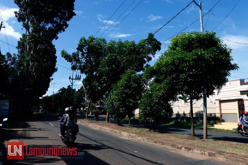 Jalan P. Emir M Noer menjadi salah satu titik rawan pohon tumbang di Kota Bandar Lampung. Sebab, di sepanjang jalan ini banyak ditemukan pohon besar dan kondisi batang pohon yang miring ke badan jalan. (Lampungnews/El Shinta)