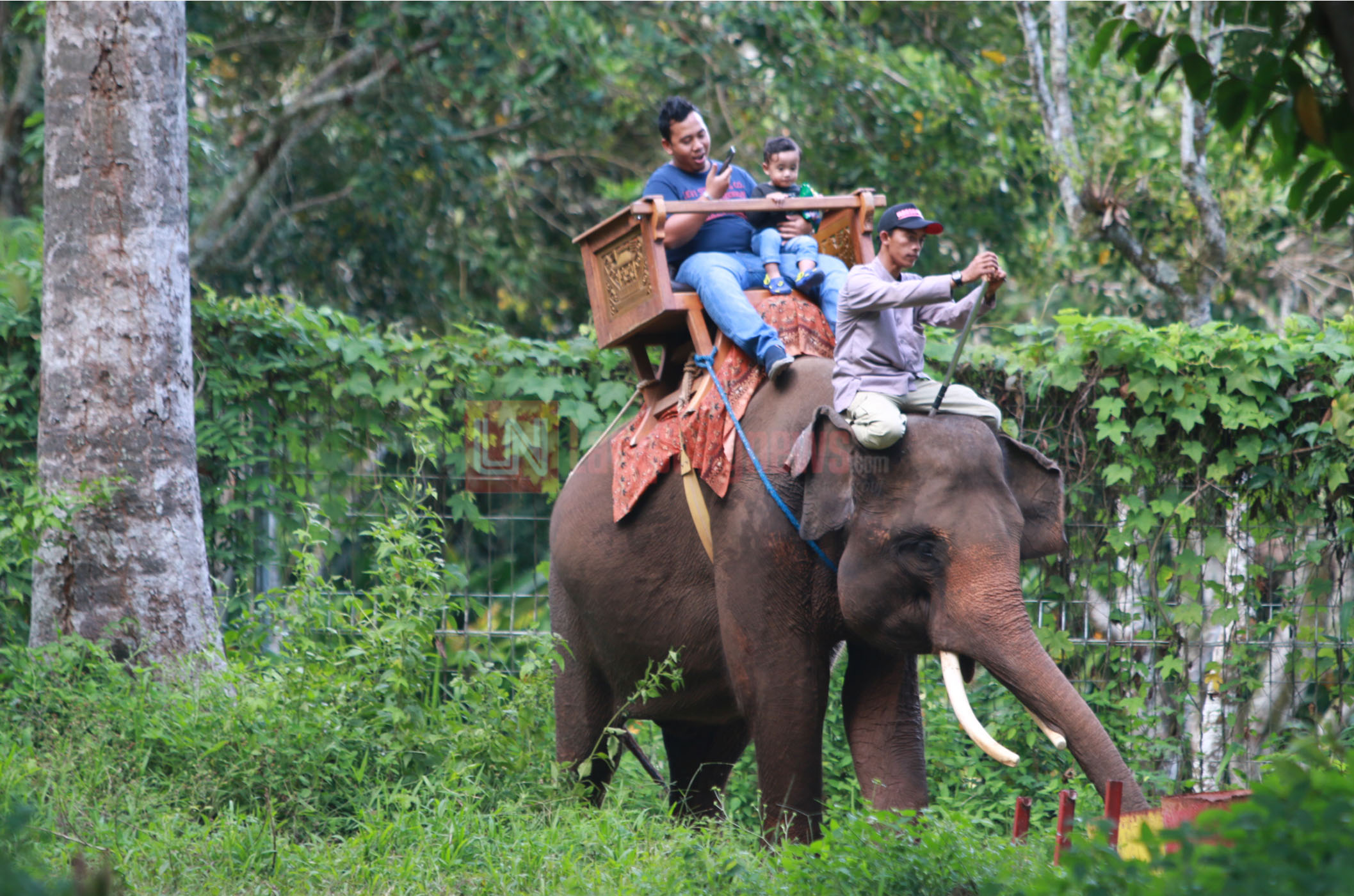 Pengunjung menikmati hiburan menaiki gajah jinak di Taman Wisata Lembah Hijau, Senin (1/1). Menunggang gajah masih menjadi favorit wisatawan yang datang mengunjungi Lampung pada libur panjang Natal dan Tahun Baru 2018. (Lampungnews.com/El Shinta)
