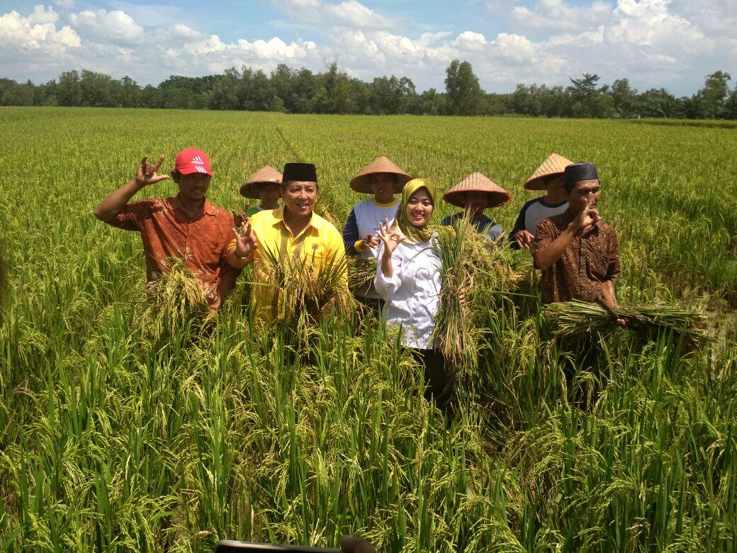Pasangan Arinal-Nunik Panen Padi di Lampung Timur (Lampungnews/Davit)
